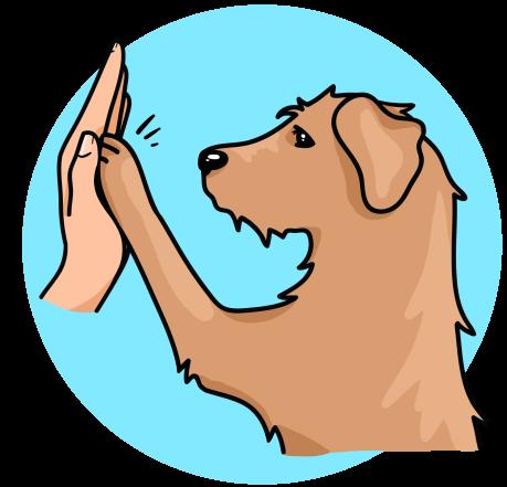 Éducatrice Comportementaliste Canin 06
